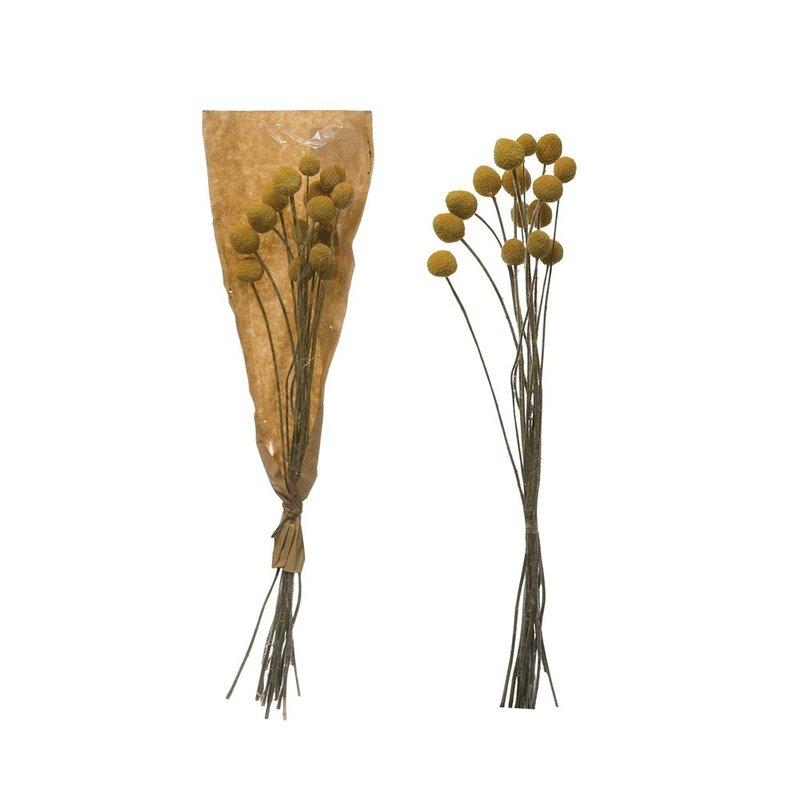 Dried Natural Craspedia Bunch