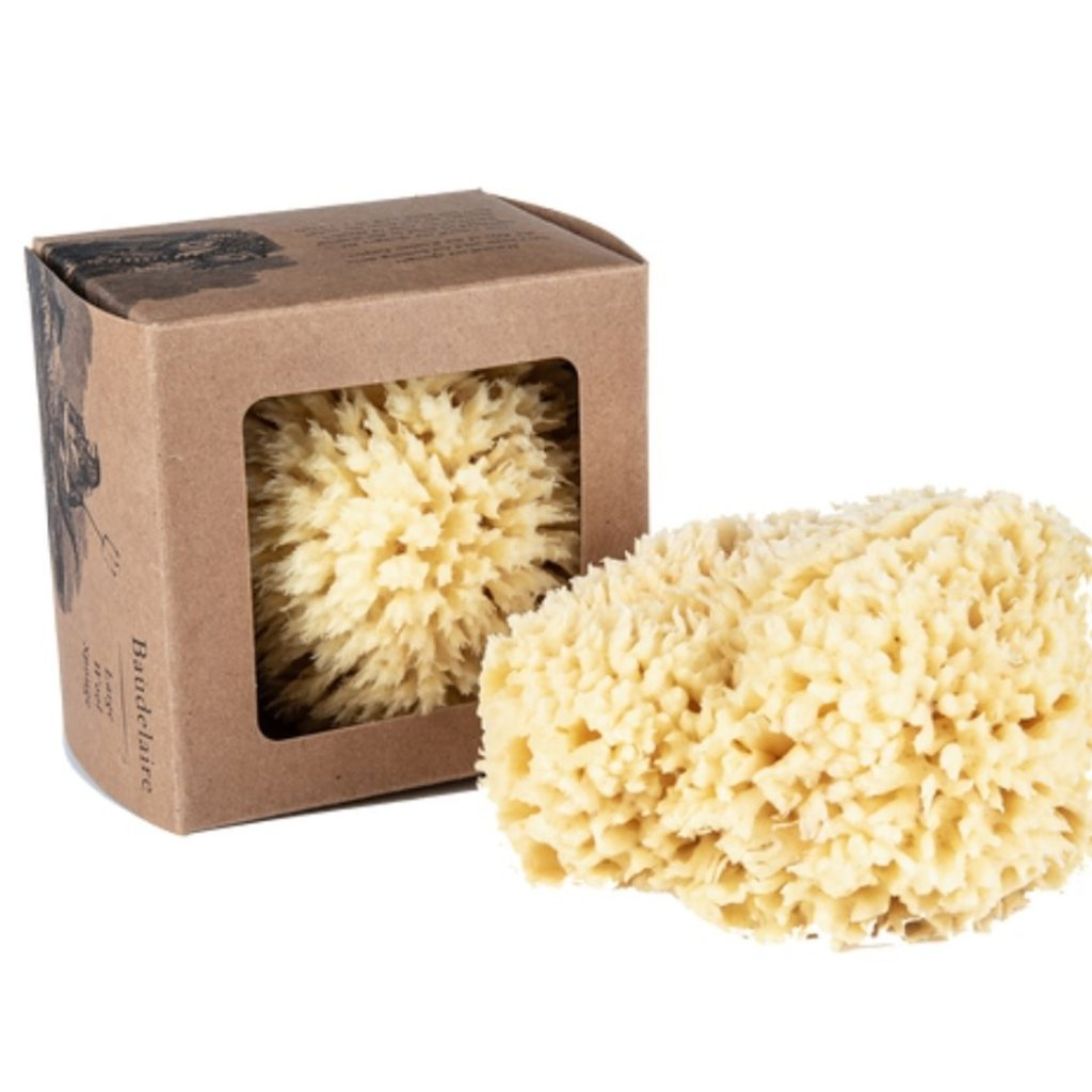 Baudelaire Wool Sponge Boxed Large