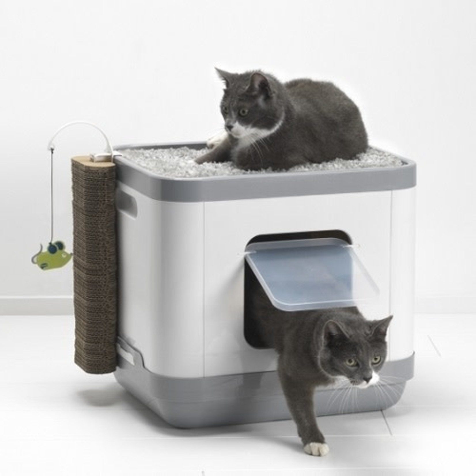 Cat concept All-in-One