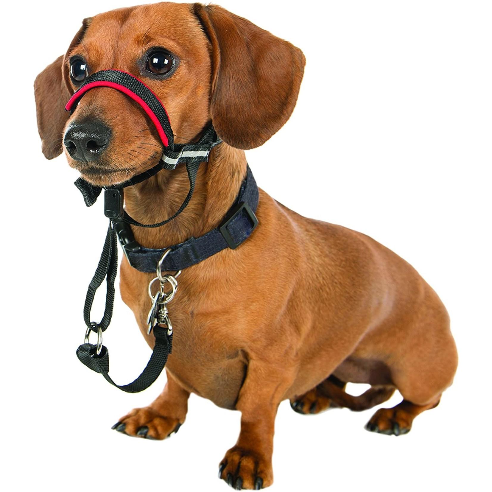 Halti Optifit Head Collar S
