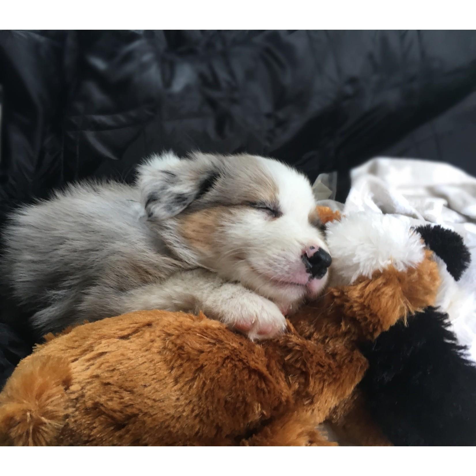 Snuggle Puppy Brown + White