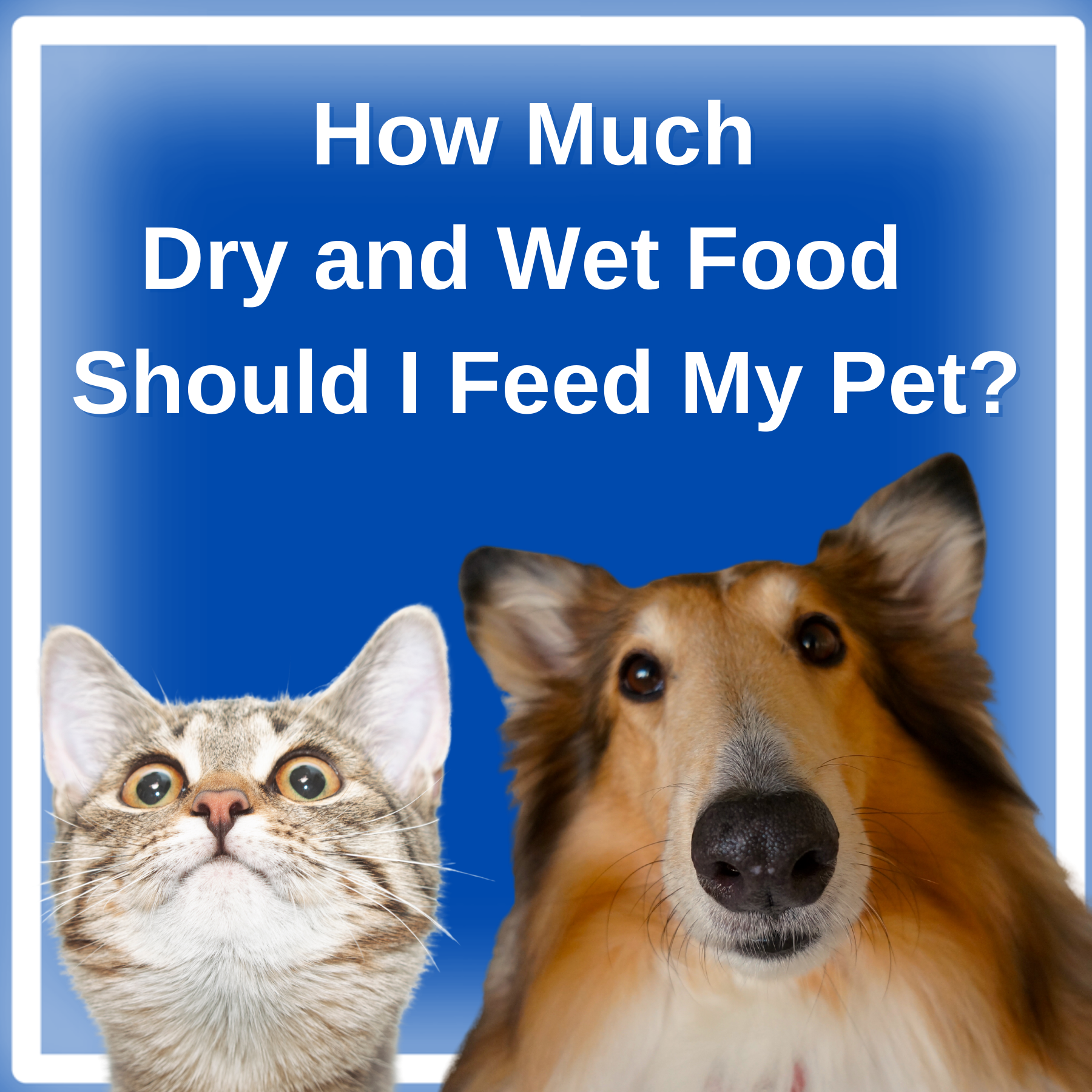 How to feed Kibble, Wet food and meal mixer?
