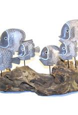 Fish Swimming on Driftwood