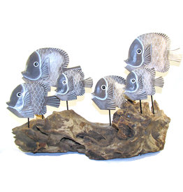 Fish Swimming on Driftwood