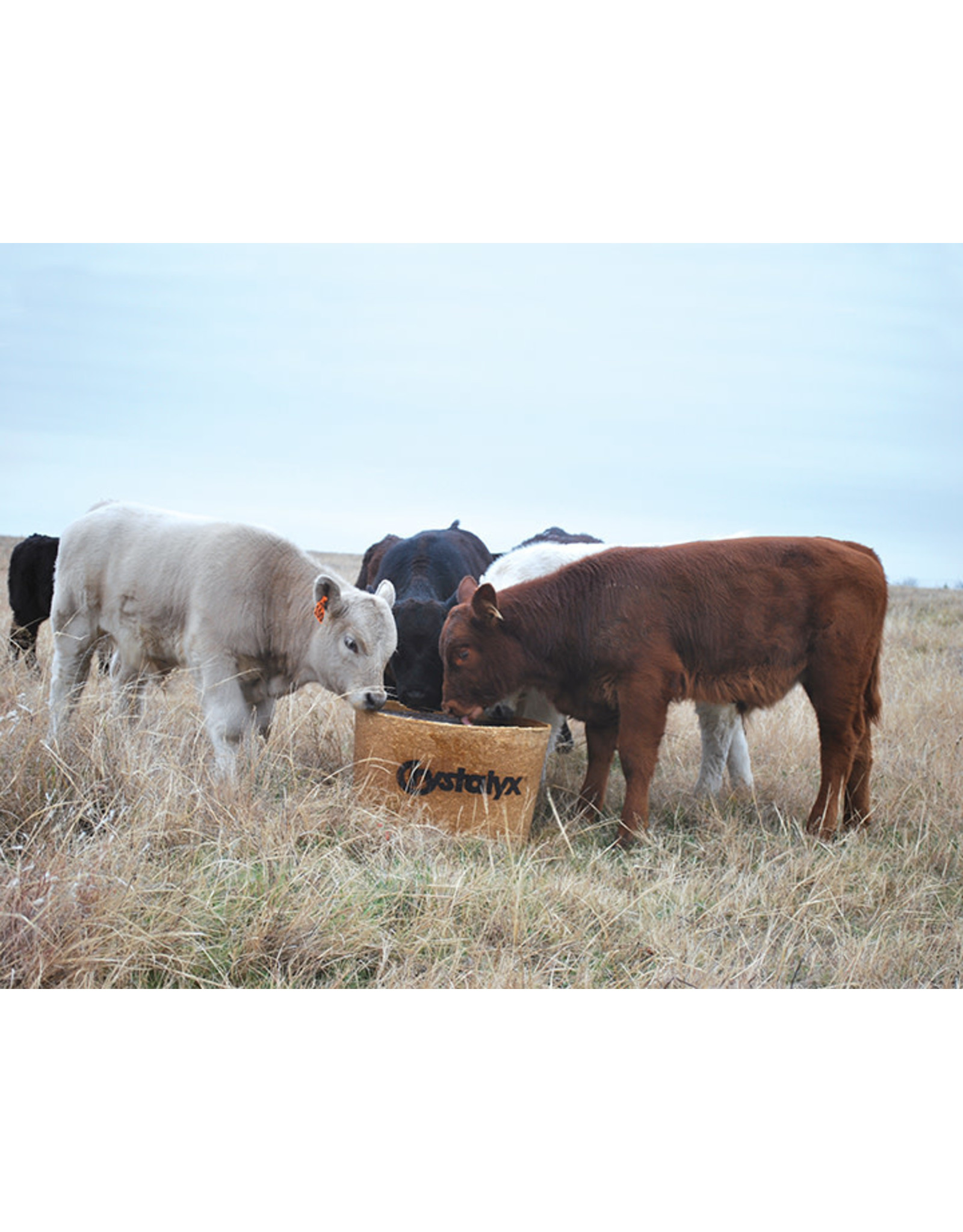 Brigade Biodegradable Barrel 200lbs  ideally fortified and suited for weaning calves, as well as 45 days prior to breeding. Statistically shown to add .38 lbs average daily gain, decrease mortality by half, and lower sick calves by almost HALF.