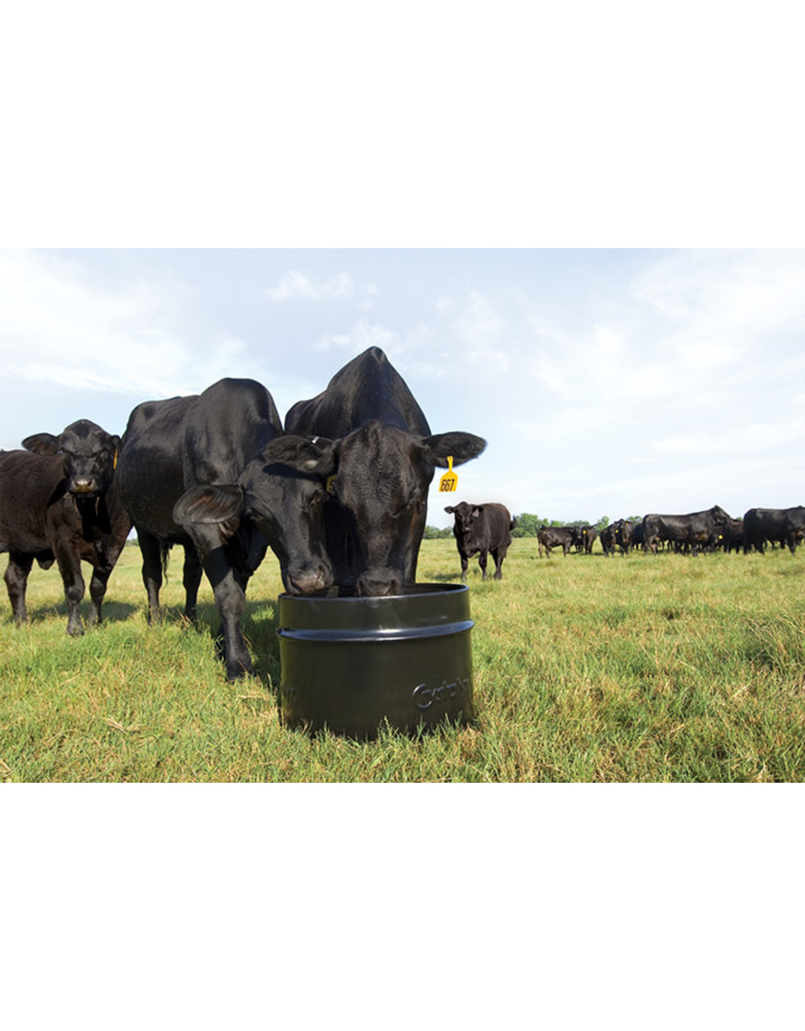 Breed Up 28% Steel 250lbs      Ideal for heifers, cows, and bulls. Use before calving to aid in the final weeks of gestation to help determine the health and performance of her calf & her clean up. Also use before breeding to insure a proper catch.