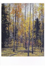 """""""Autumn in the Forest"""" Notecard"""