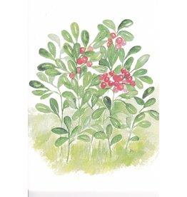 """Lingonberries"" Watercolor Notecard"