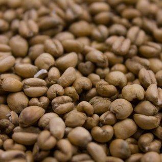 Crisp Torrefied Wheat