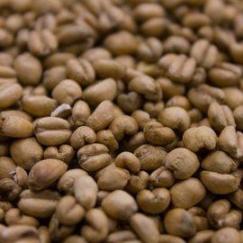 Crisp Torrefied Wheat 10 lb Bag