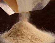 Dry Malt Extracts