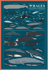 Pop Chart Lab Whales, Dolphins, and Porpoises