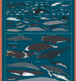 Pop Chart Lab P3-Whales, Dolphins, and Porpoises Pop Chart 24X36