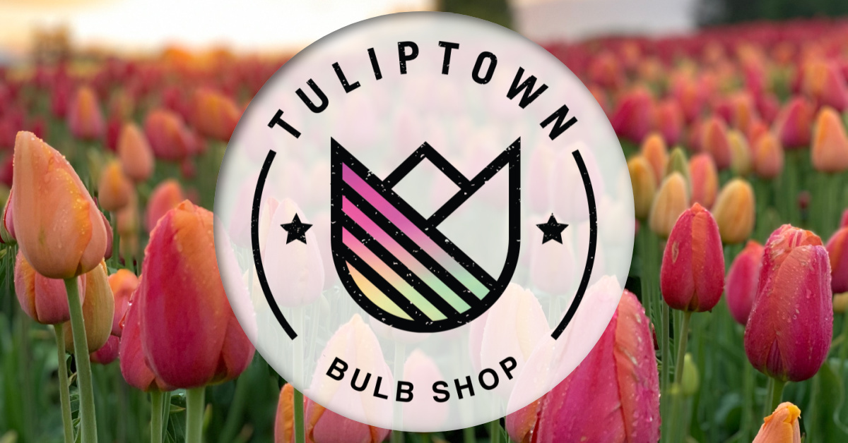 Bulb Shop Promo