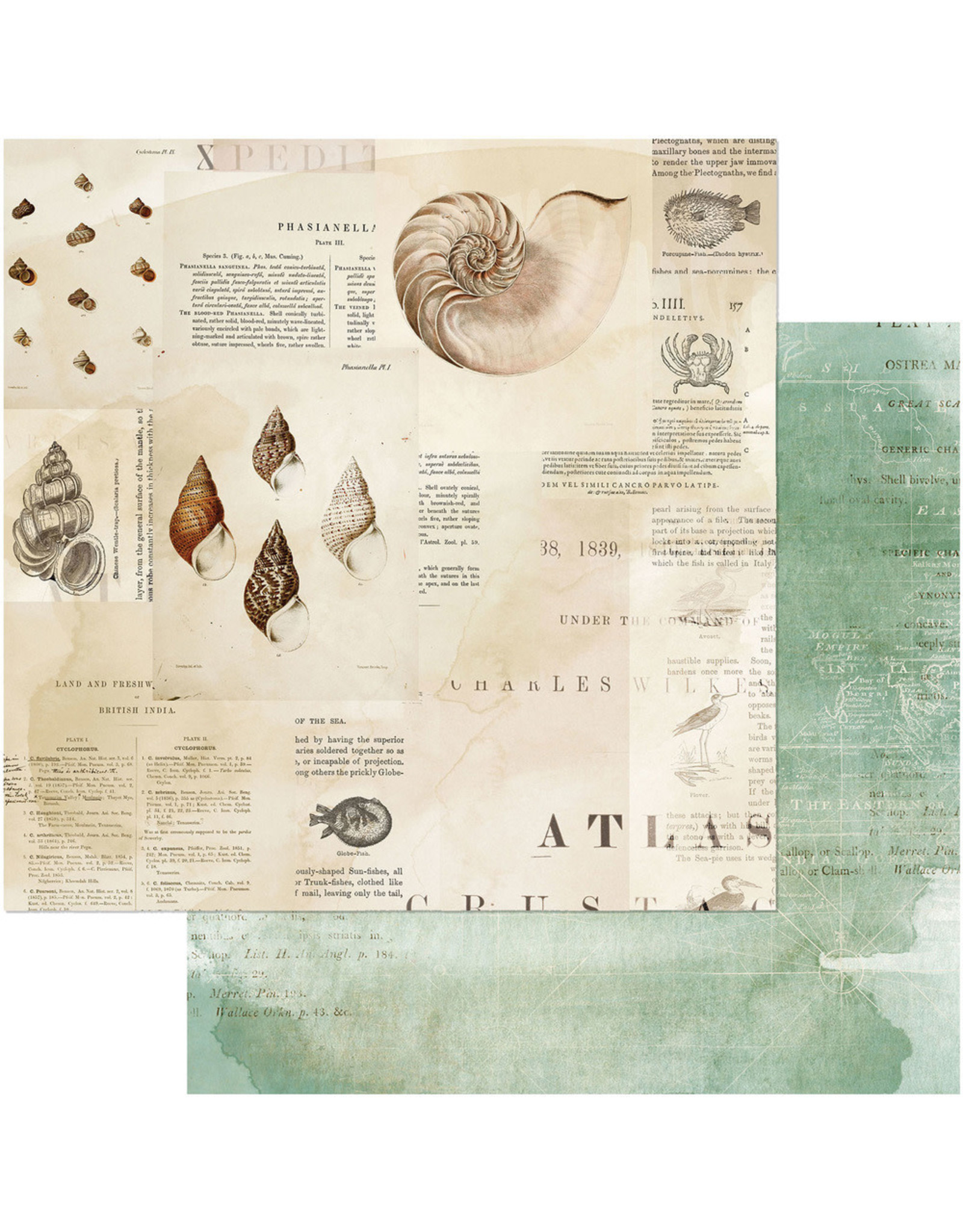 49 AND MARKET 12X12 Patterned Paper, Vintage Artistry Shore - Triton's Shell
