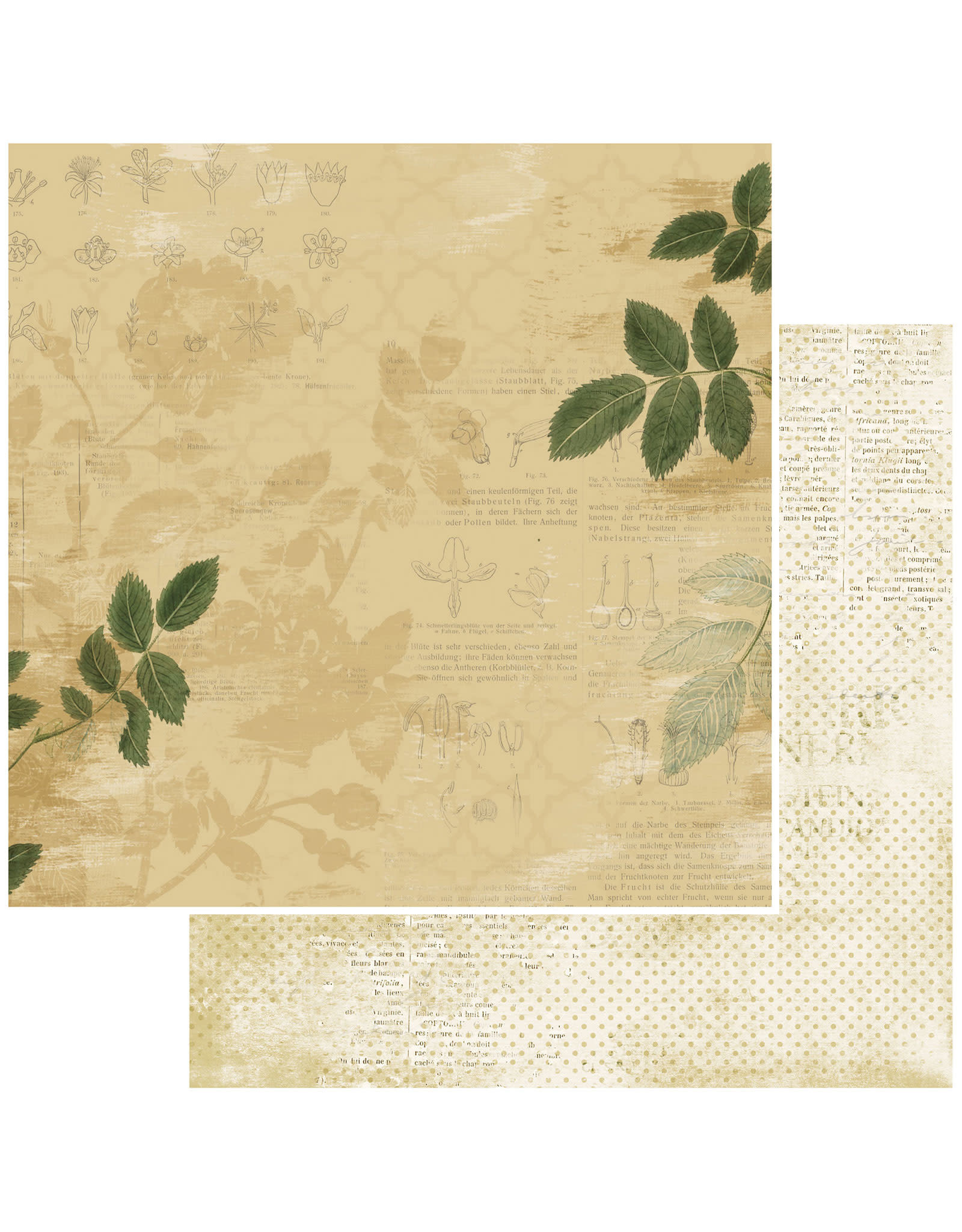 49 AND MARKET 12X12 Patterned Paper, Vintage Artistry Everyday - Zealous