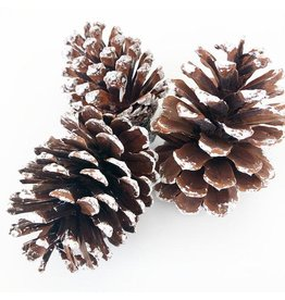 Foundations Décor Tray Decor - Frosted Pine Cones
