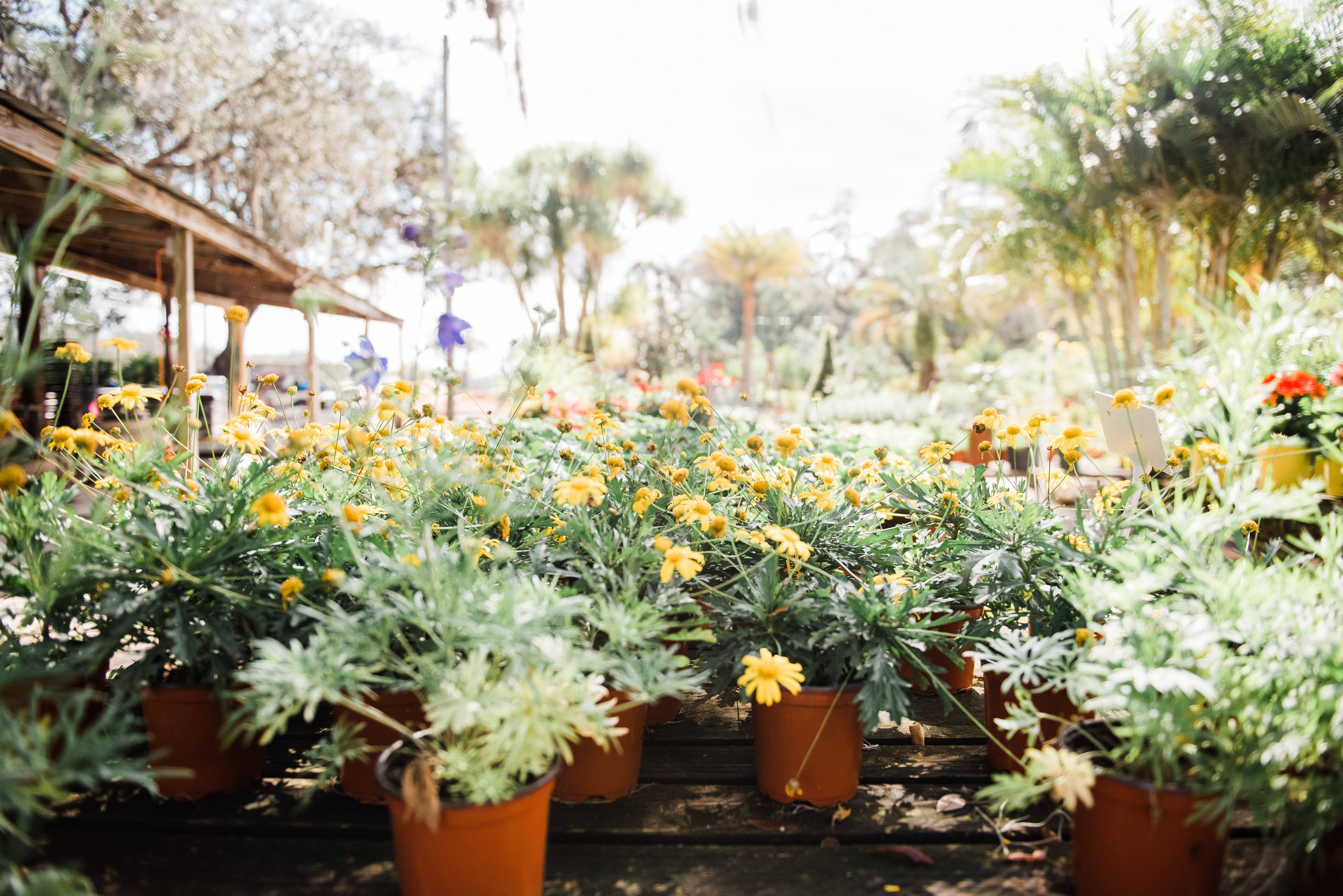 Over 35 Acres filled with plants, trees, flowers and more