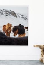 Icelandic Horse Fine Art Print and Frame