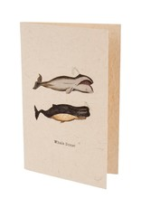Whale Done Greeting Card - Set of 4