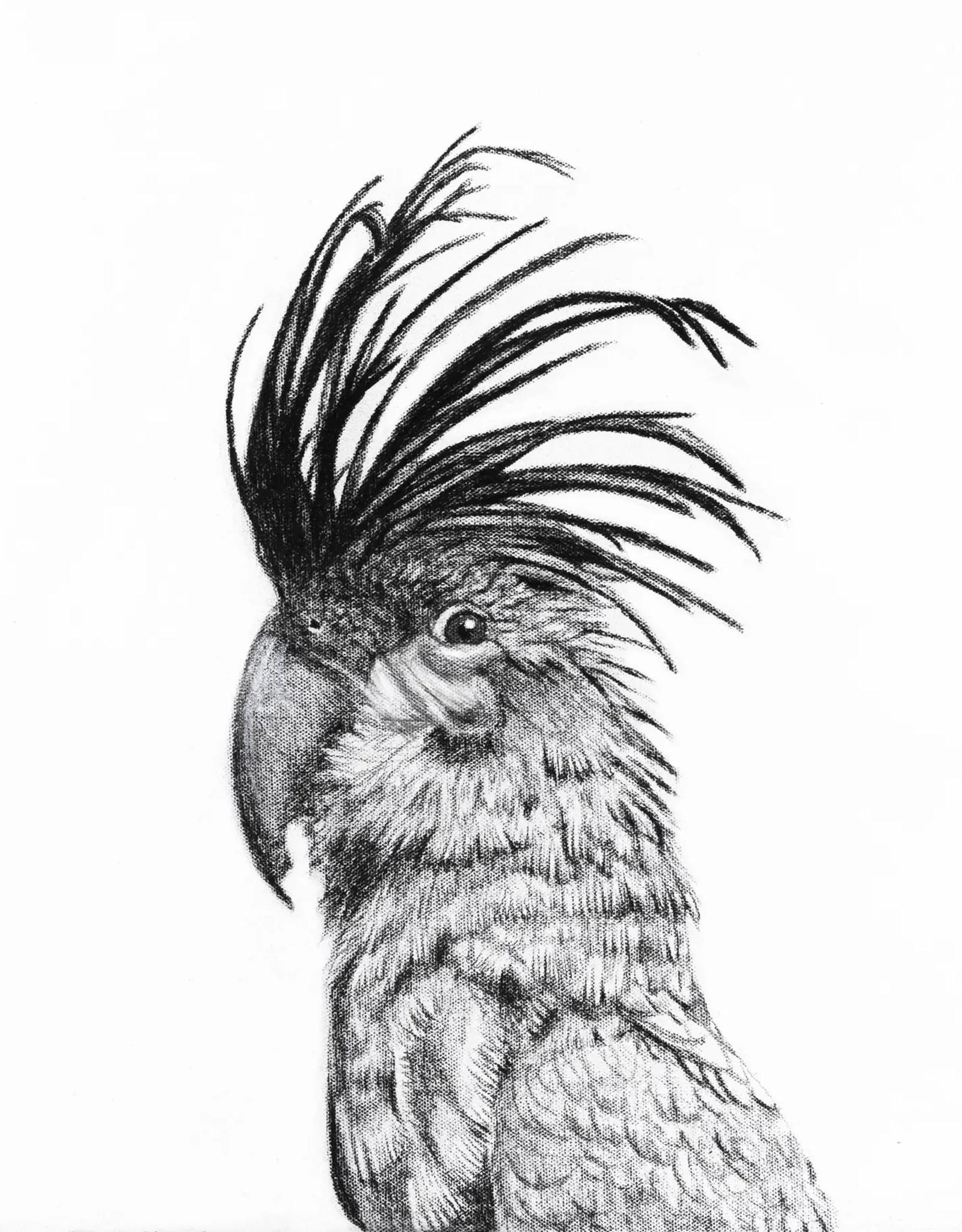 Le Nid - Cockatoo Portrait  12x18
