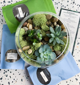 "DIY Terraruim Kit in 8""  Glass Globe"