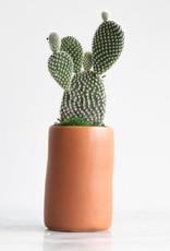 Mini Cactus with Planter #1
