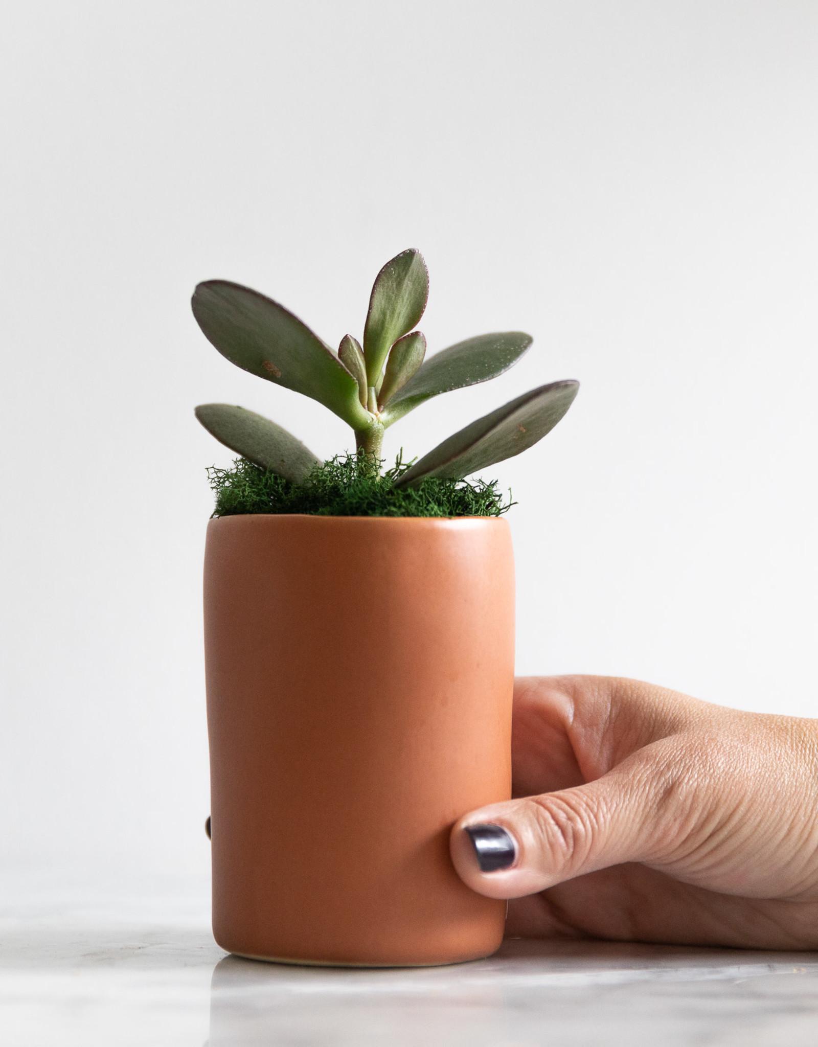 Mini Succulent  with Planter #4