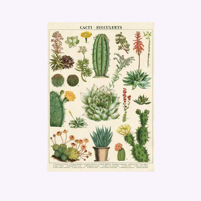 Cavallini Succulents & Cacti Poster