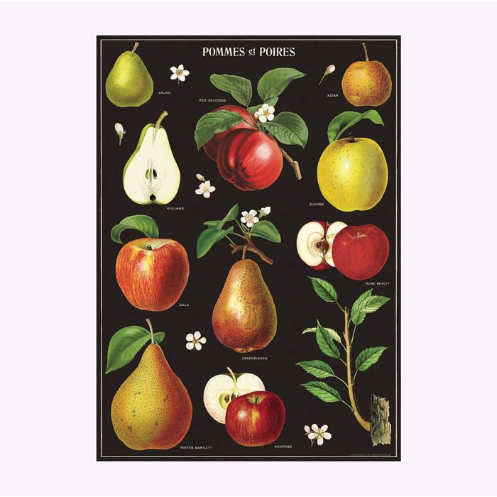 Cavallini Apples and Pears Poster