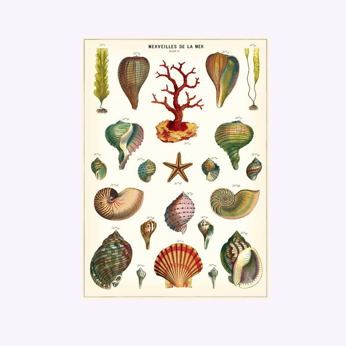 Cavallini Wonders of The Sea Poster