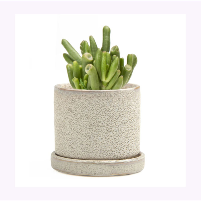 Chive Small Speckled Ivory Minute Planter
