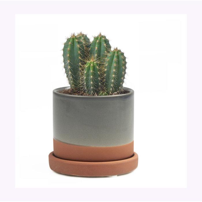 Chive Small Terracotta Minute Planter