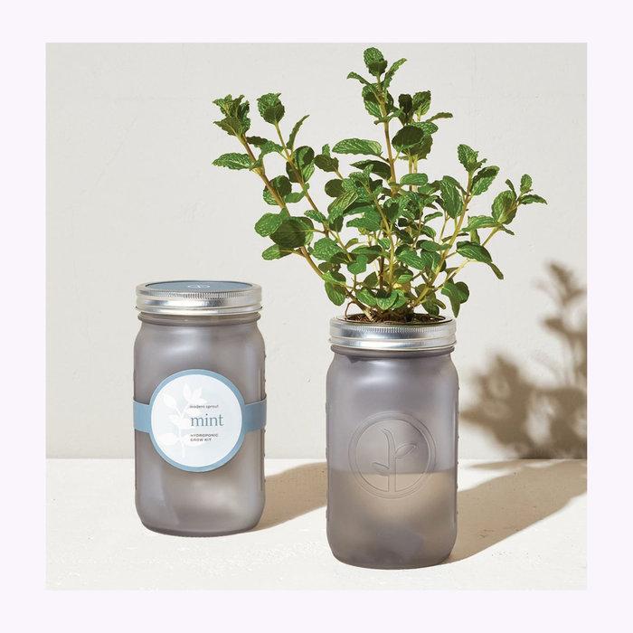 Modern Sprout Modern Sprout Mint Garden Jar