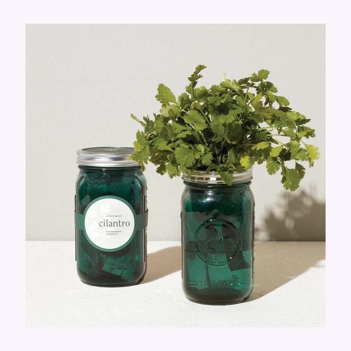 Modern Sprout Modern Sprout Cilantro Garden Jar