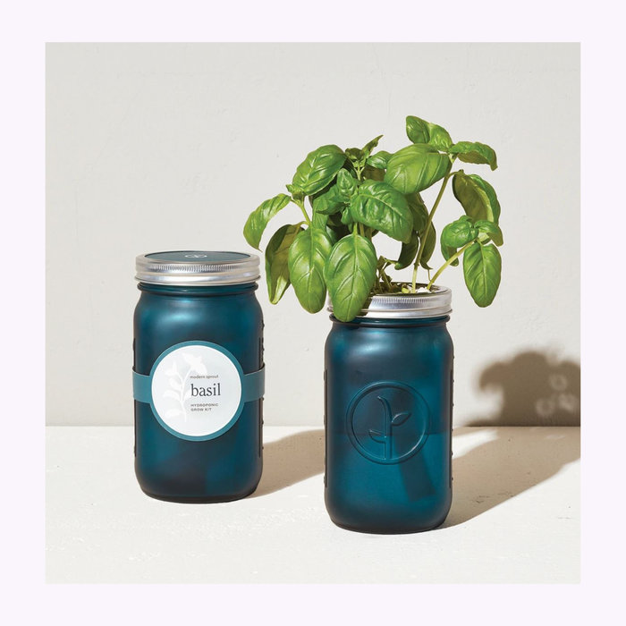 Modern Sprout Modern Sprout Basil Garden Jar