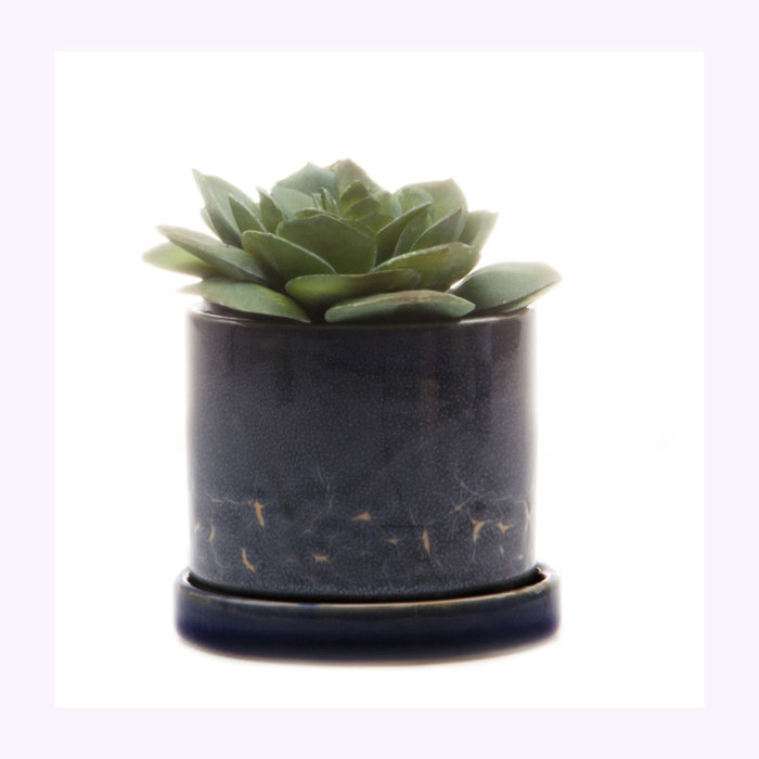 Chive Petit cache-pot Minute Cosmos Chive