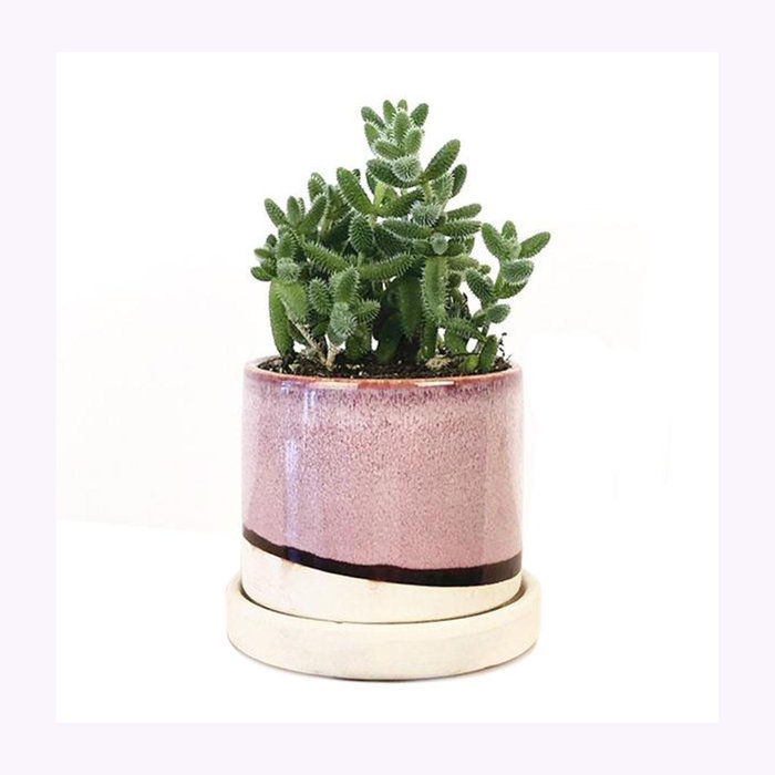 Chive Chive Small Burgundy Minute Planter
