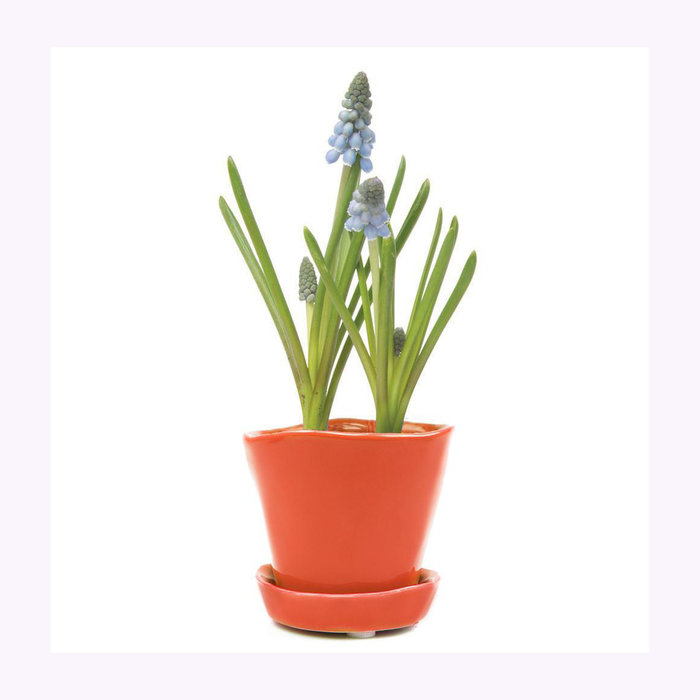Chive Chive Orange Tika Planter
