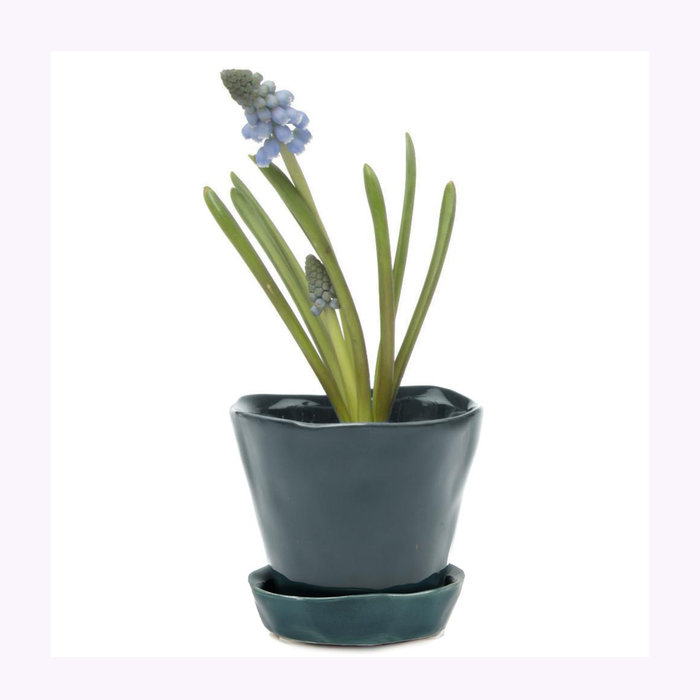 Chive Chive Spruce Tika Planter