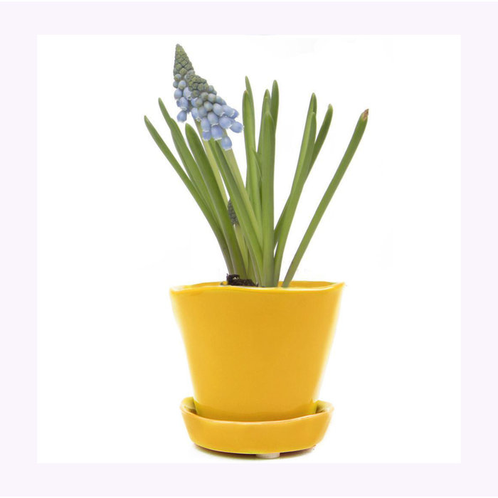 Chive Yellow Tika Planter