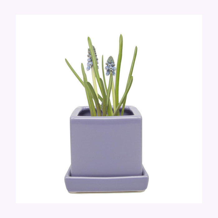 Chive Chive Periwinkle Cube Planter