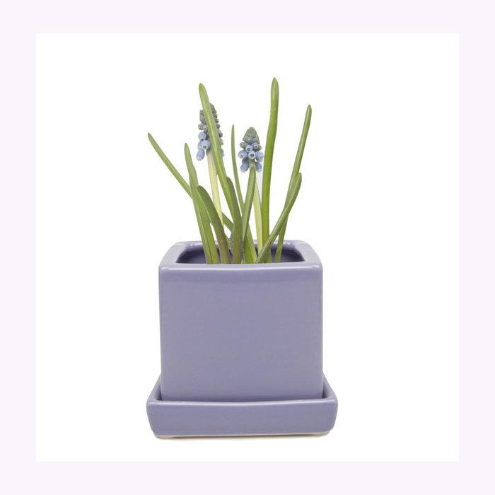 Chive Petit cache-pot Cube Periwinkle Chive