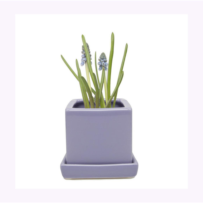 Chive Periwinkle Cube Planter