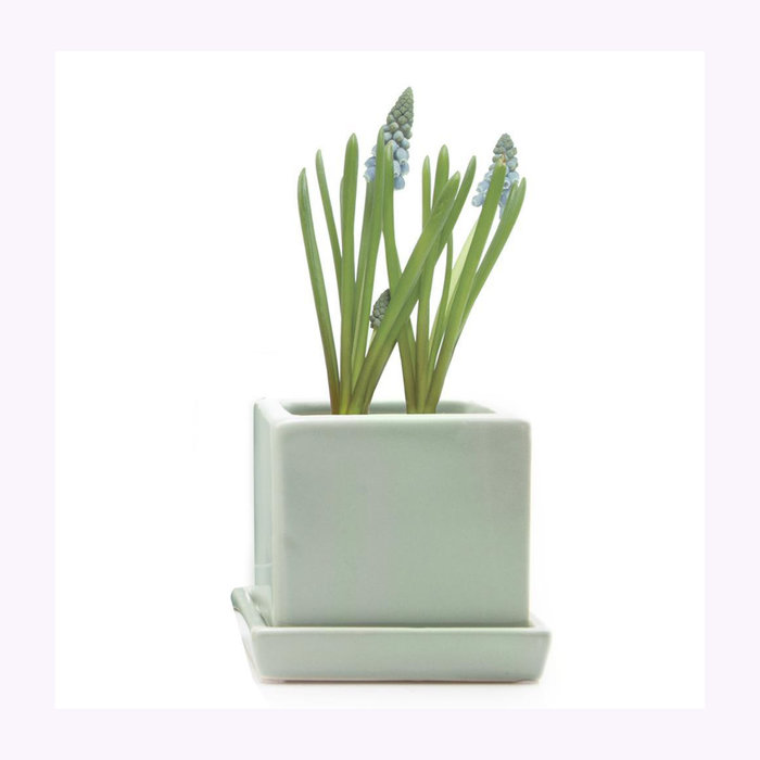 Chive Chive Spearmint Cube Planter