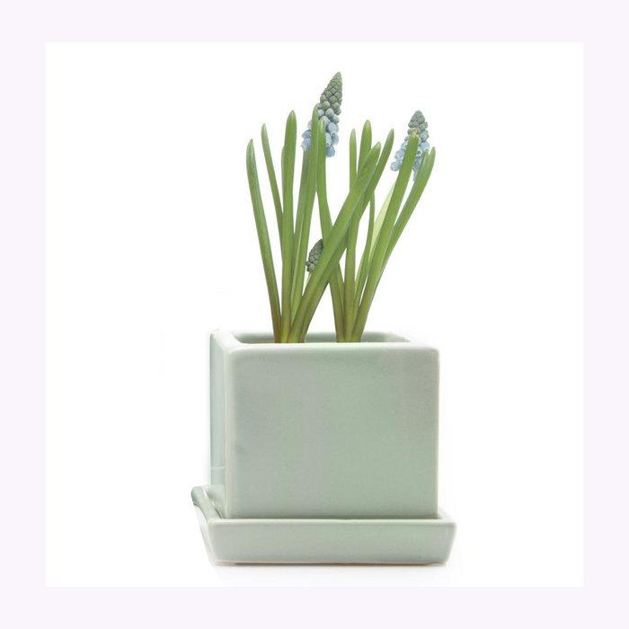 Chive Petit cache-pot Cube menthe Chive