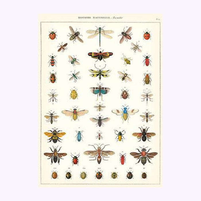 Cavallini Affiche Insectes Cavallini