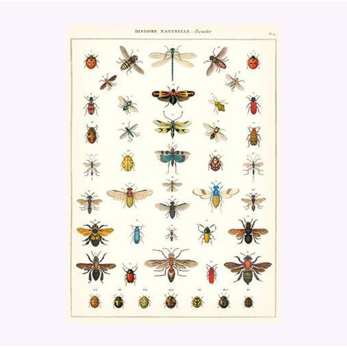 Affiche Insectes Cavallini
