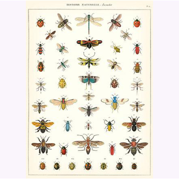 Cavallini Insects Poster