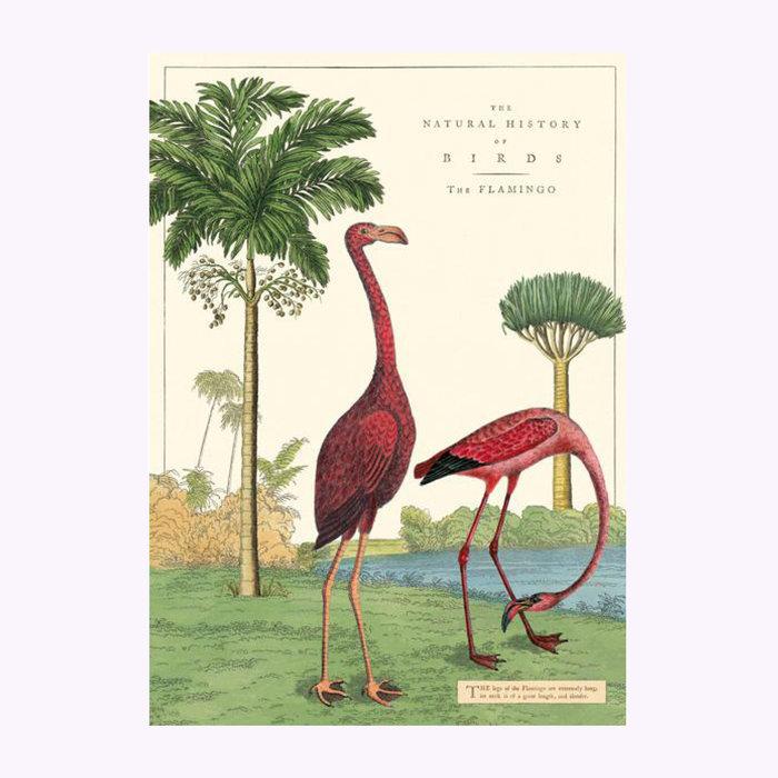 Cavallini Affiche Flamant rose Cavallini